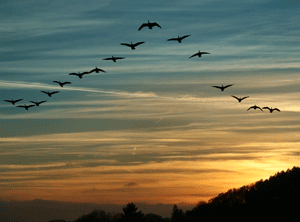 blog_supervisor_flying_v.png