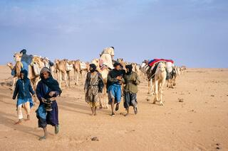 camel_caravan.jpg