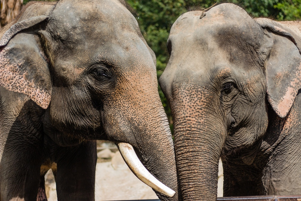 elephant_sanctuary.jpg