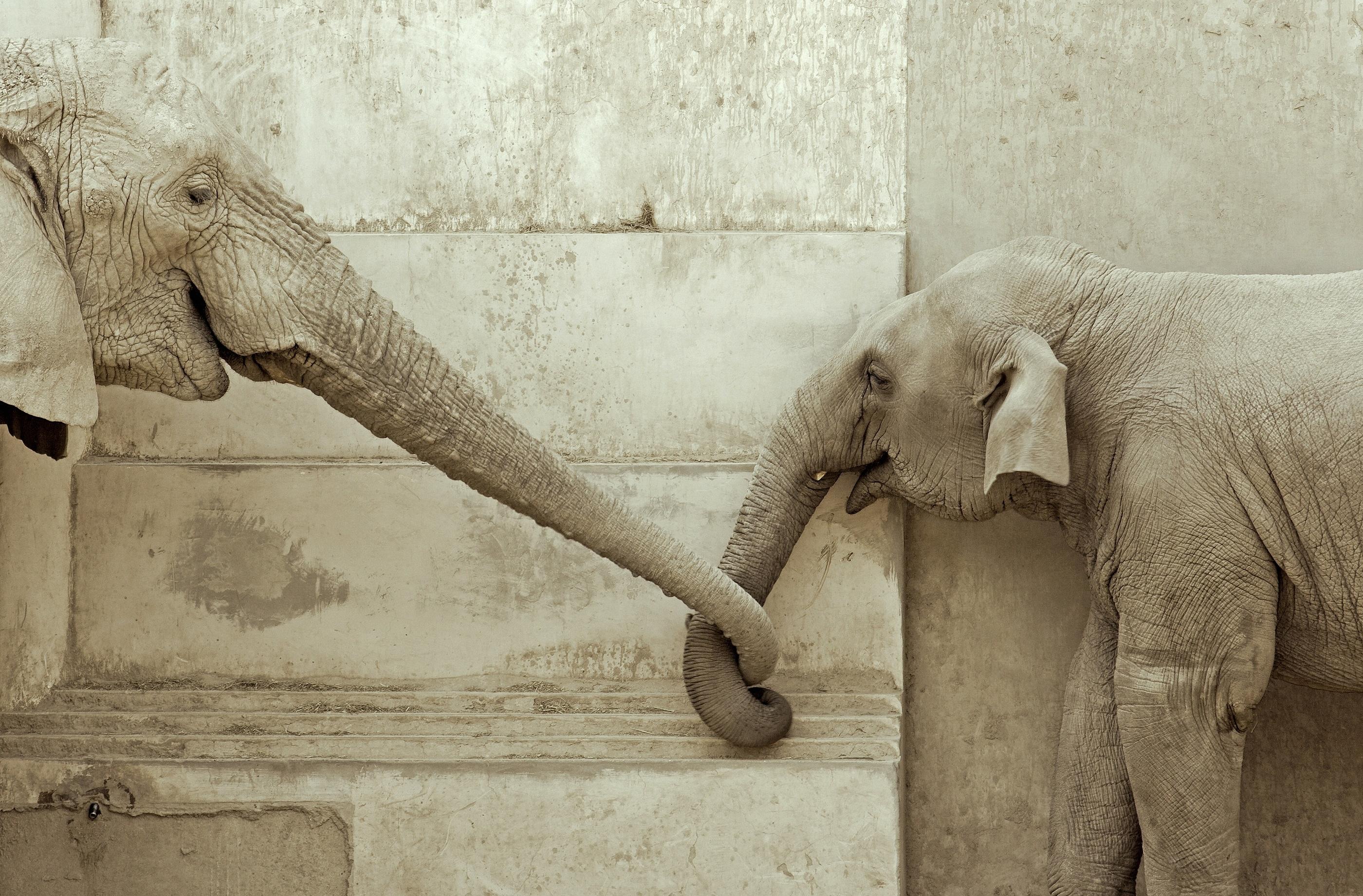 elephants_trunks.jpg