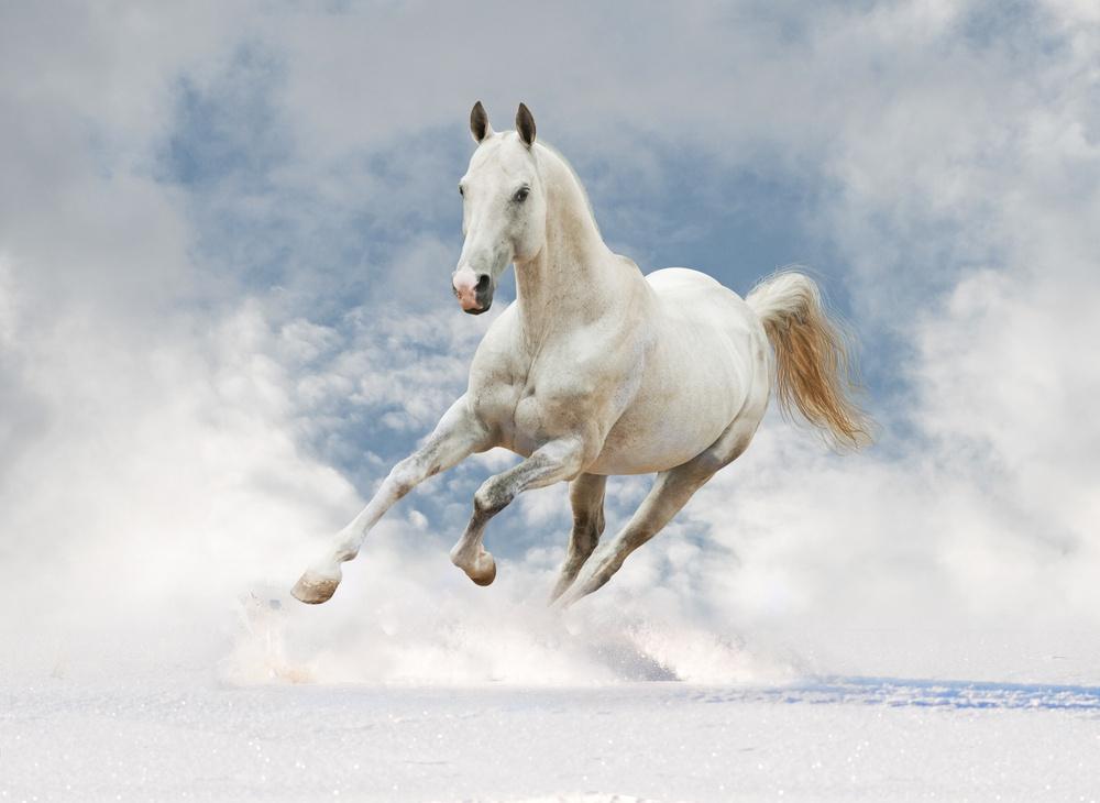horse_mythical.jpg