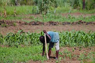 planting-farm-africa.jpg