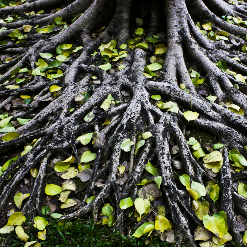 roots_of_a_tree.png