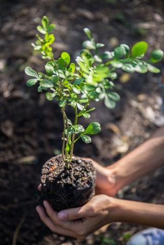 seedling-tree.jpg