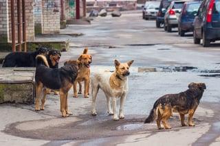 stray_dogs.jpg?t=1491434304381&name=stray_dogs.jpg&width=320