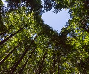 heart in trees