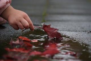 autumn-2917472_1920.jpg