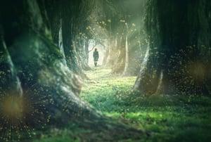 forest_wonder